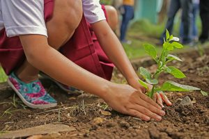 Beplanting boom