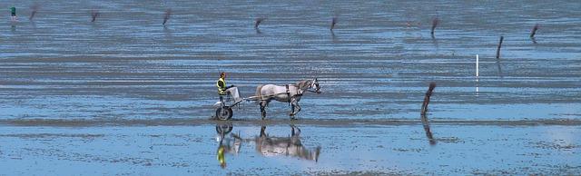 Paard strand natuur