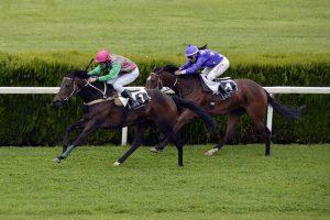 Paarden paardenrennen