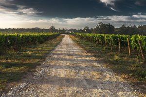 Landweg wijngaard